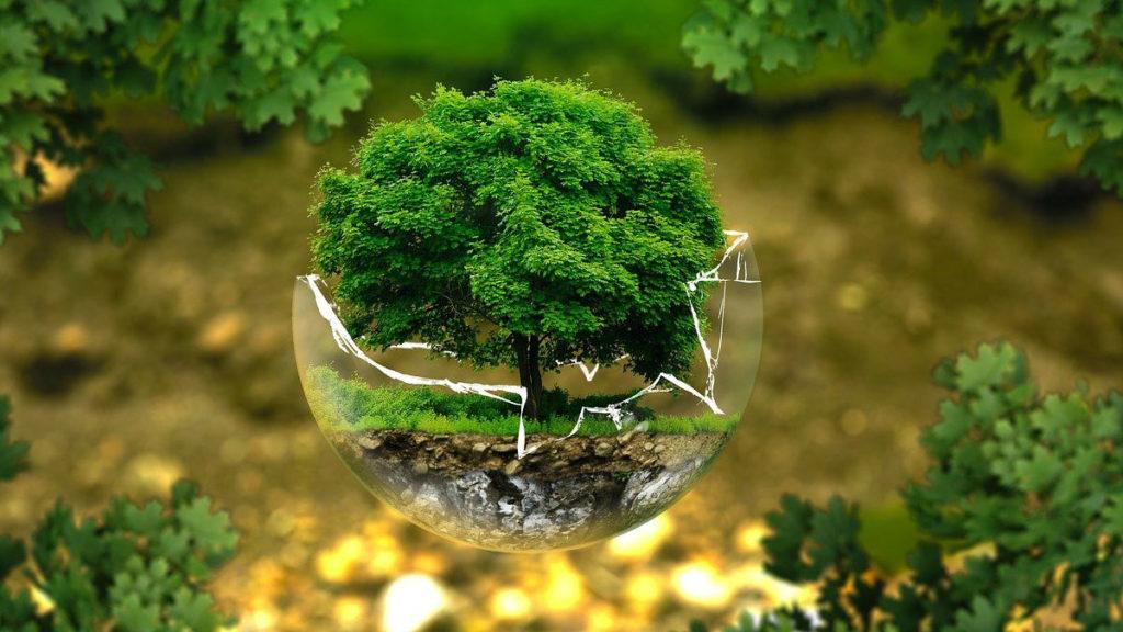 De l'écocide