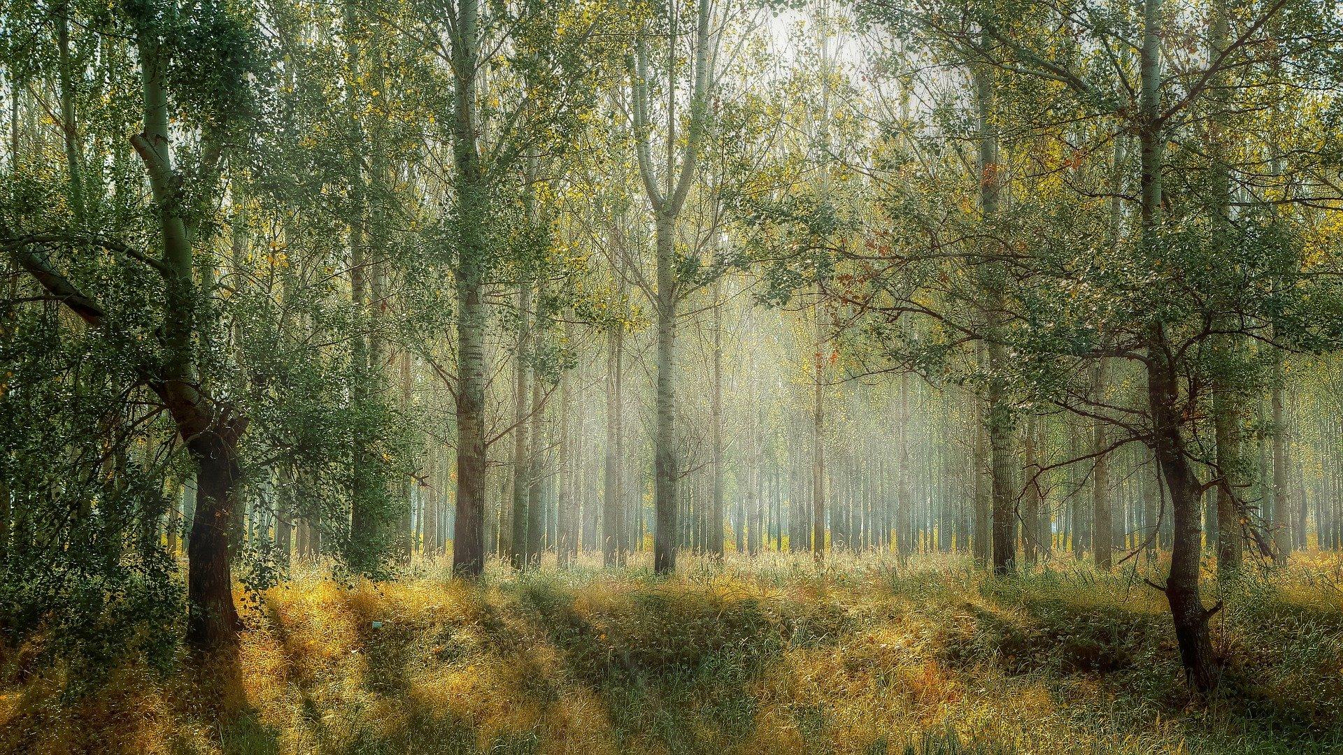 Politique Forestière : un bien commun au potentiel élevé